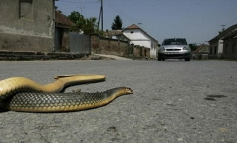 Banja Luka: Radnici Eko-Bela kod Gimnazije uhvatili i ubili zmiju