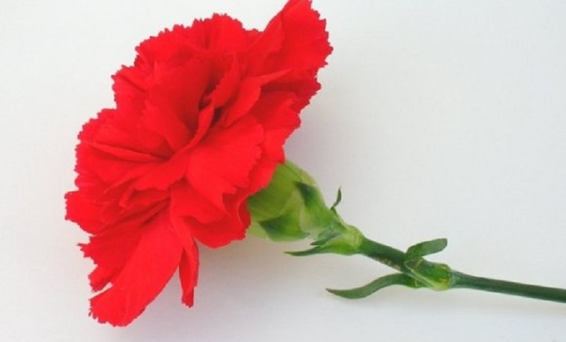 Danas je 1. maj – Međunarodni praznik rada
