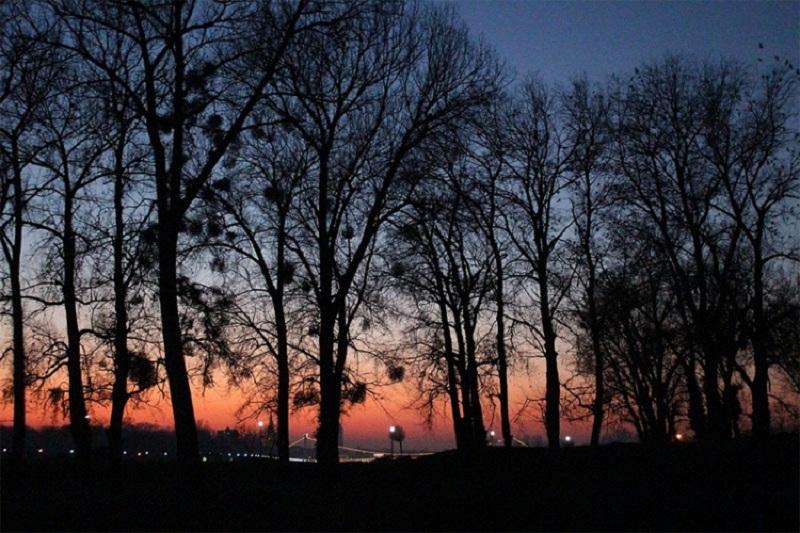 Naučnici utvrdili: I drveće se noću odmara