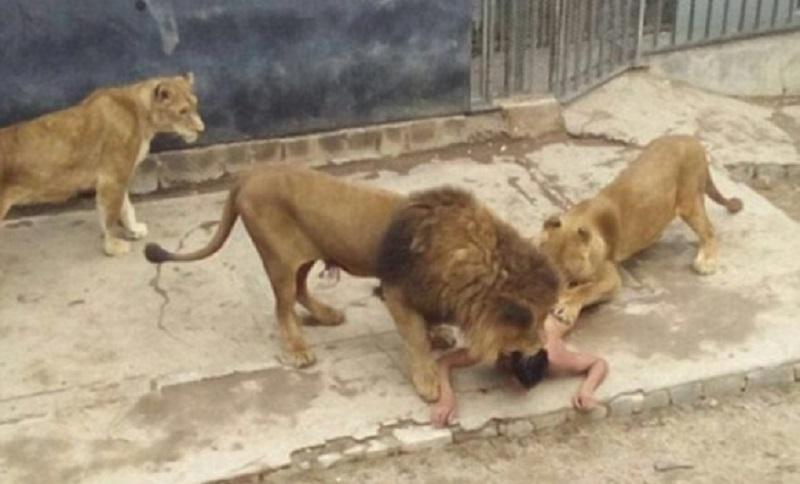 Skočio među lavove da se ubije, na kraju oni nastradali