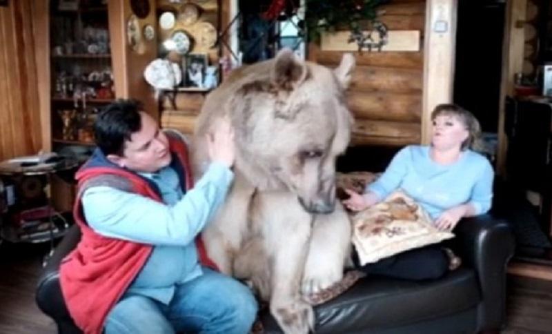 Žive sa medvjedom u kući, najviše voli da gleda televiziju (VIDEO)