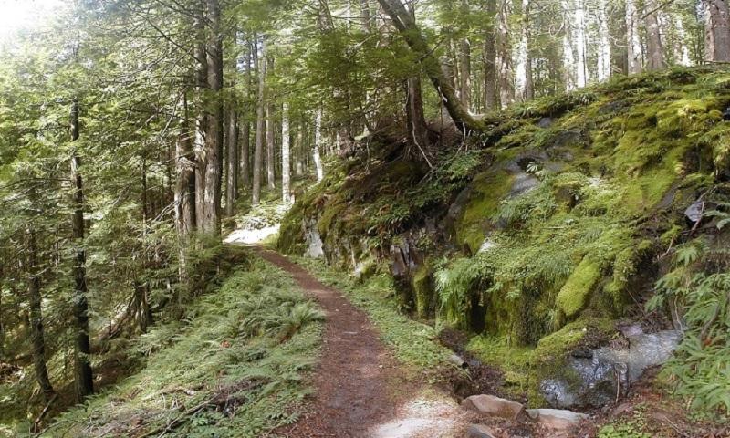 """Grad planira da zaštiti """"Park šumu Starčevica"""""""