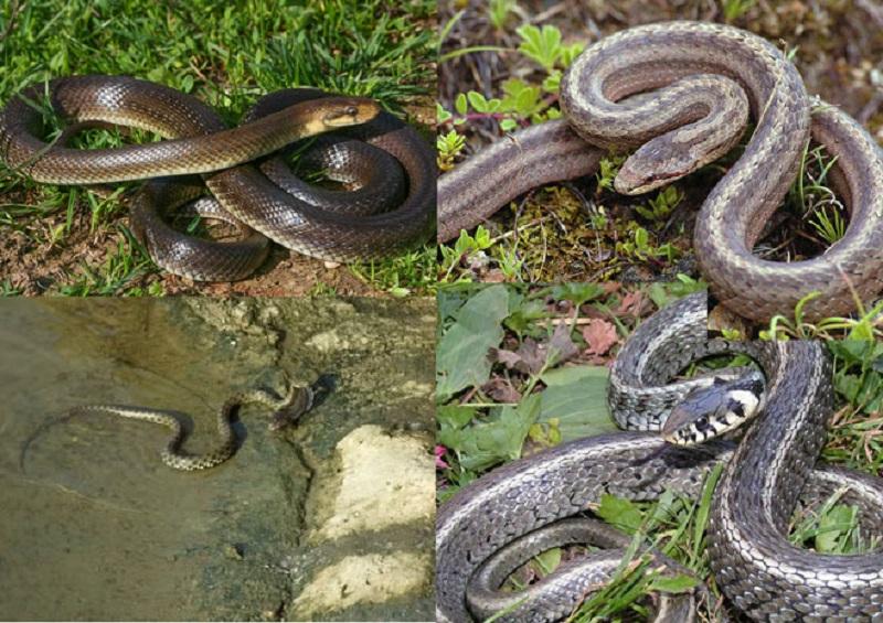 Banja Luka: Bespotrebna histerija zbog zmija