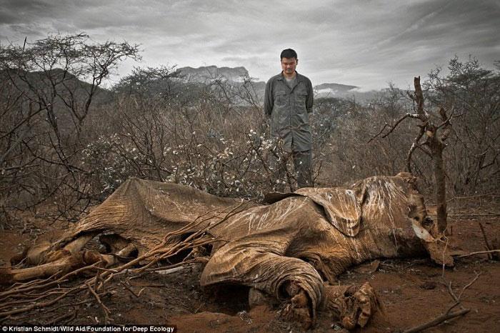 3. Slon kojeg je ubio lovokradica i ostavio da istruli.