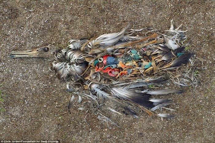 5. Mrtvi albatros pokazuje šta se događa s našim otpacima.