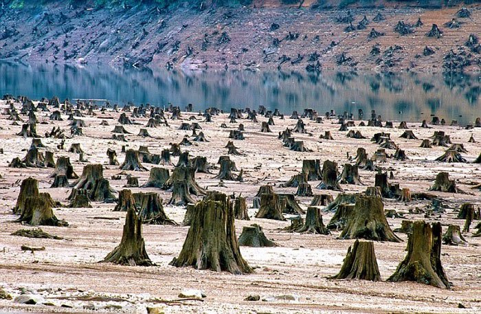 9. U Oregonu je ova hiljadu godina stara šuma žrtva motorne pile za novu branu.