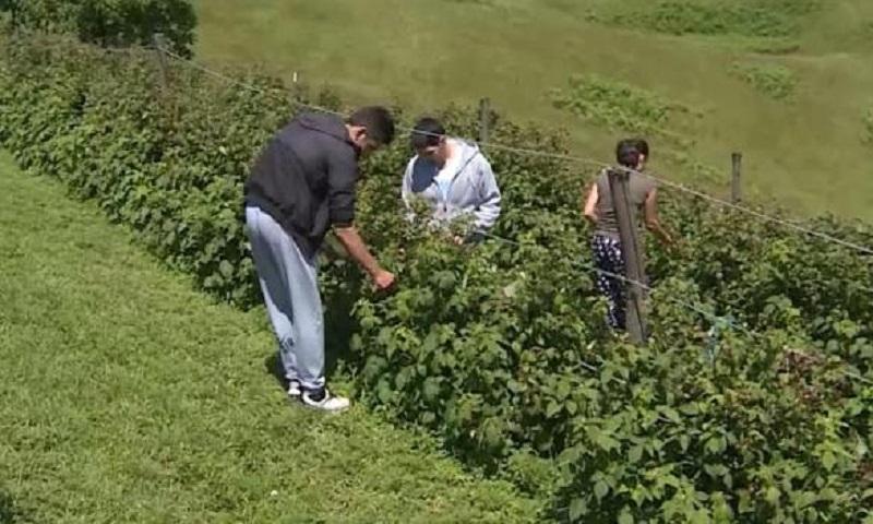 Vratili se na djedovinu: Troje mladih iz Banjaluke obrađuju zemljište na Manjači