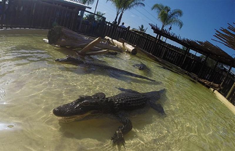 Orlando: Aligator odvukao dvogodišnjeg dječaka sa plaže