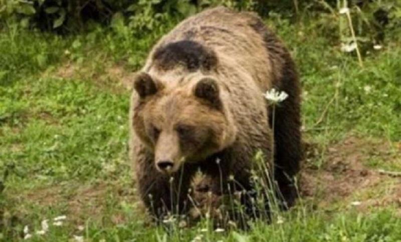 Medvjed u potrazi za medom stigao skoro do Čelinca