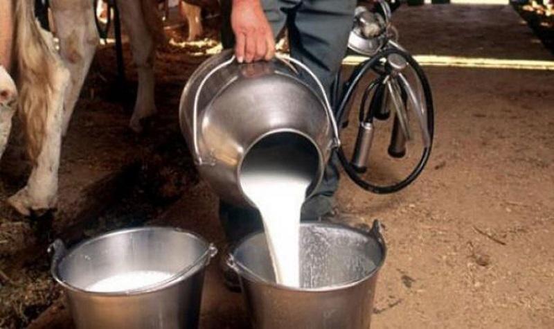 Smetaju vam mliječni proizvodi? Čovjek je jedina vrsta koja pije mlijeko drugog sisara