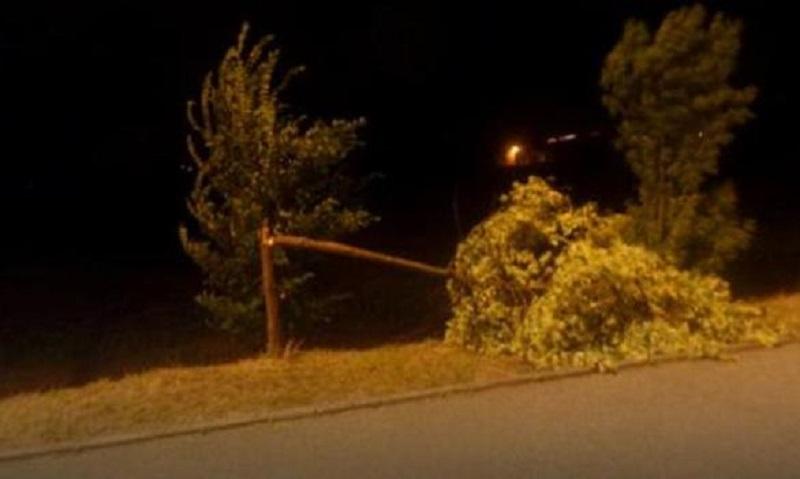 Banjaluka: Olujni vjetar lomio mlada stabla