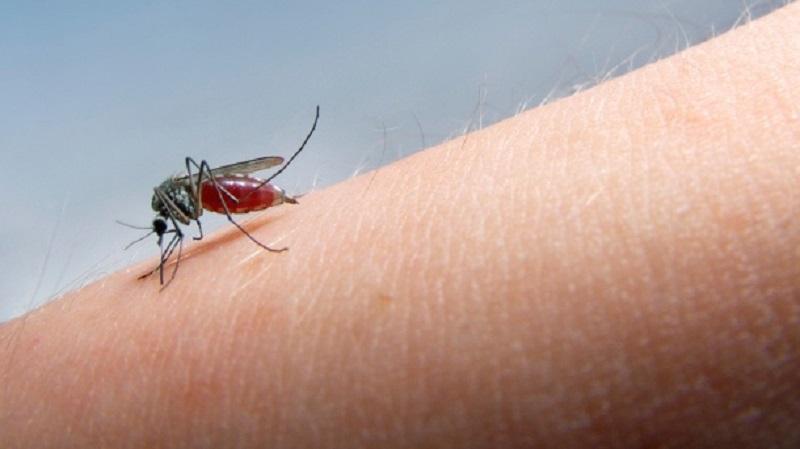 Kako da napravite sprej protiv komaraca