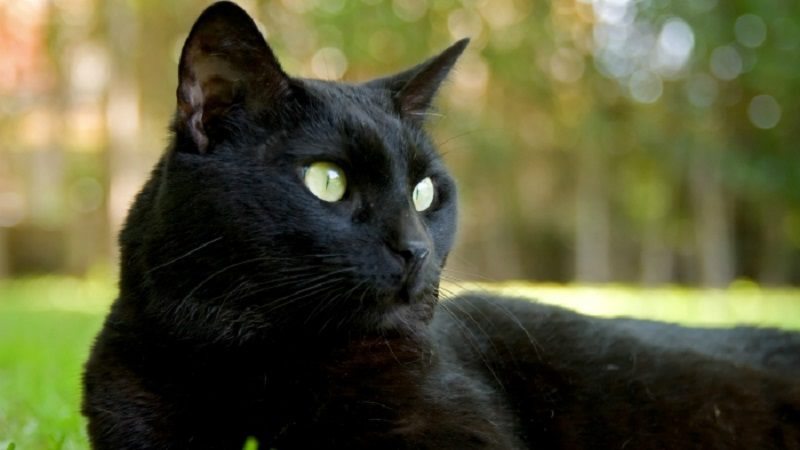 Mačak se kandidovao za poslanika Državne dume