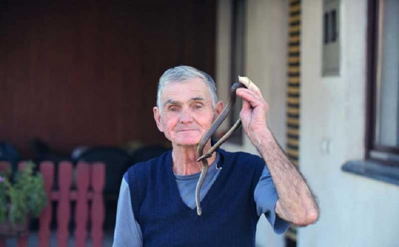 Mićo iz Bijeljine sa zmijama priča više od pola vijeka