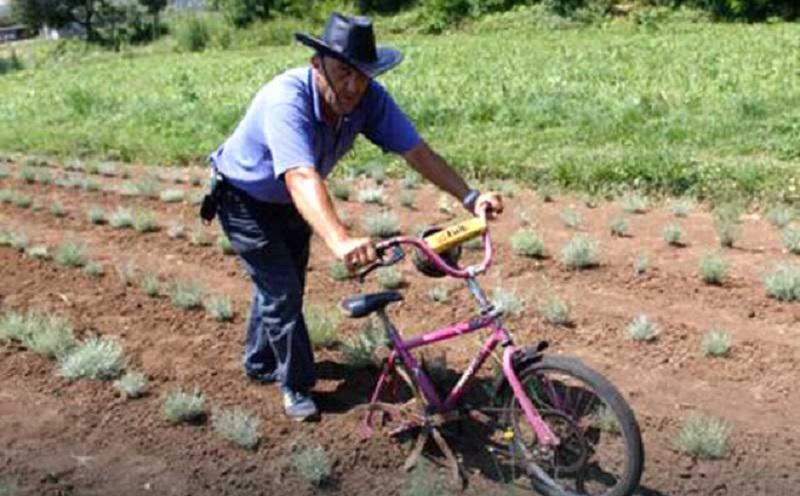 Hercegovac Mile Misir biciklom okopava sadnice hercegovačkog zlata