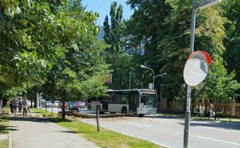 Trulo stablo palo preko centralne ulice u Banjaluci