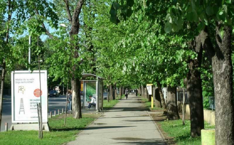Banjaluka: Drvoredi posljednji put kontrolisani 2001.