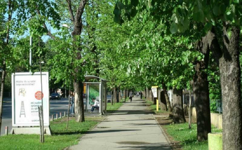 Banja Luka: Sadnja novih stabala u oktobru i novembru