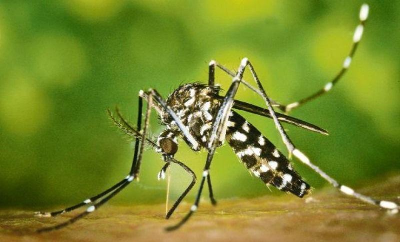 Tigrasti komarci otkriveni u pet banjalučkih naselja
