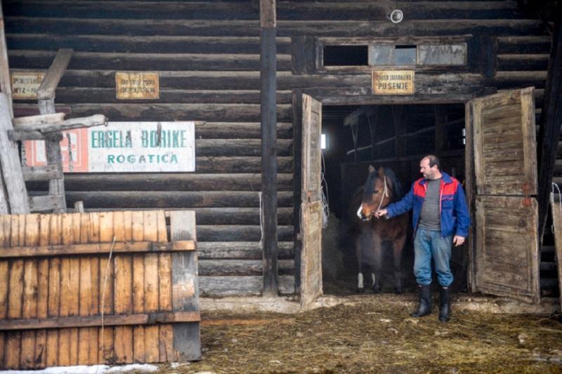 "Vlada RS sprema spas za konje iz ""Borika""?"