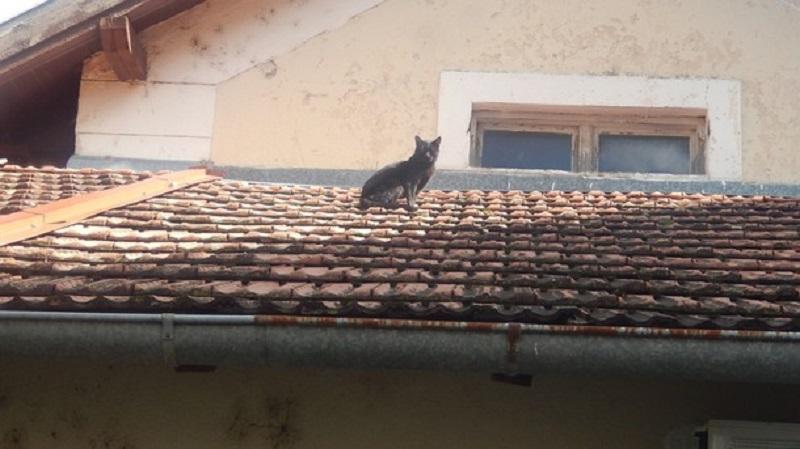 Dobro mu: Mačak tri godine ne silazi sa krova