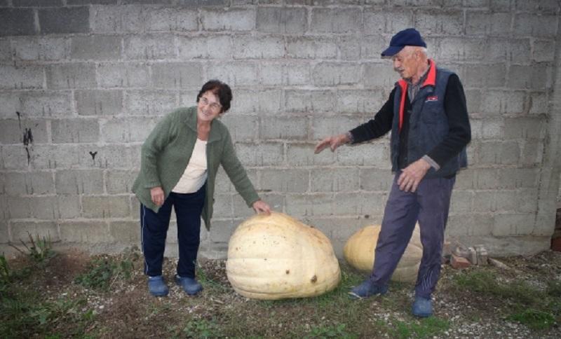 Gradiška: Bračni par uzgojio bundevu od 103 kilograma FOTO