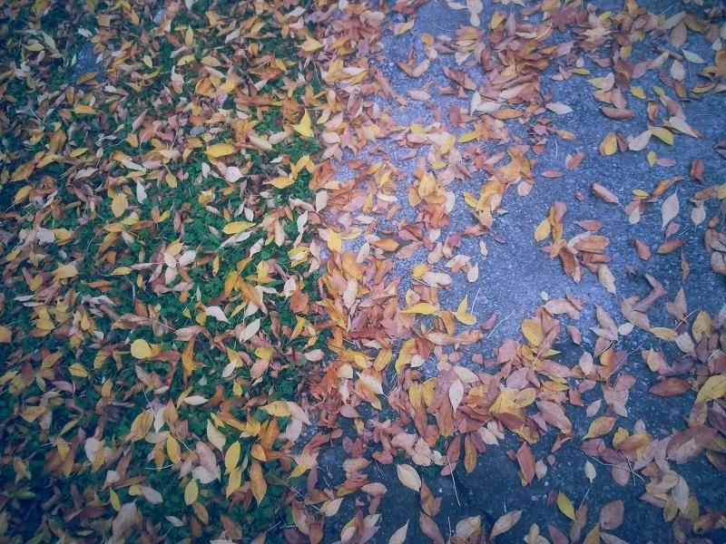 Jesen u kampusu (FOTO)