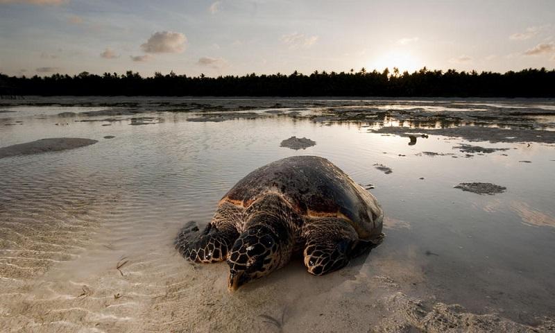 Do 2020. nestaće dve trećine živog svijeta na Zemlji?