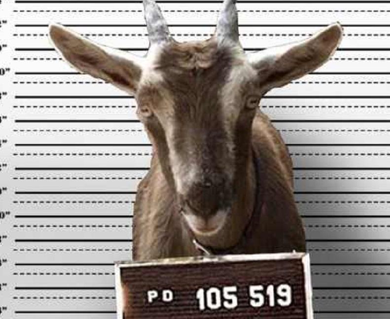 Znate li da su koze bile zabranjene u BiH?