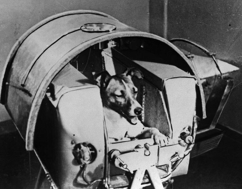 Uspomena na Lajku, psa iz svemira