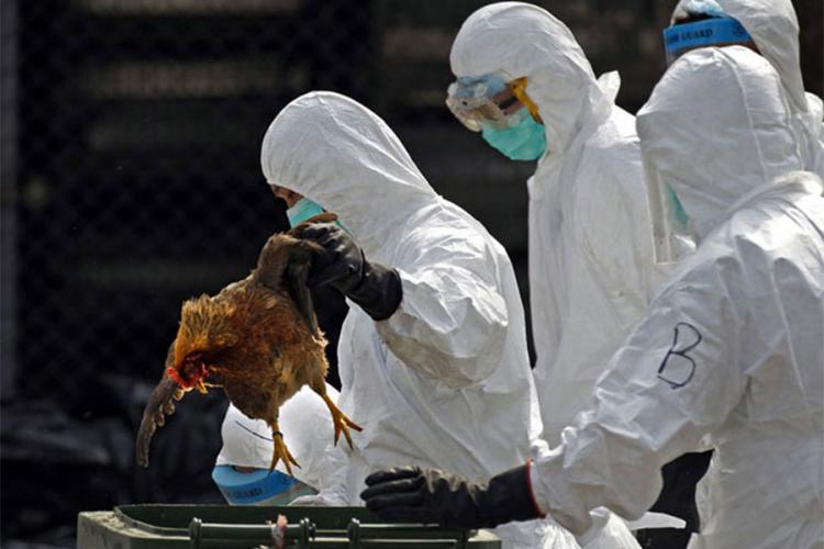 U Prijedoru zabilježen slučaj ptičijeg gripa