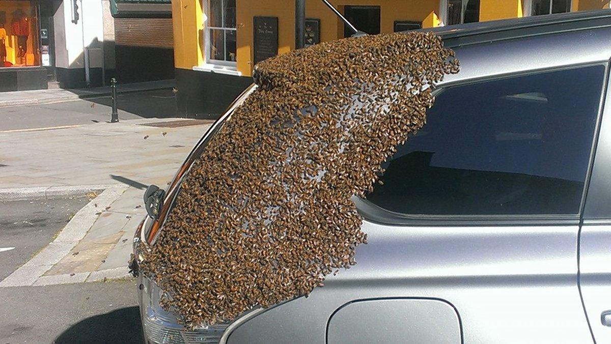 Matica se zaglavila u autu, hiljade pčela je pratilo