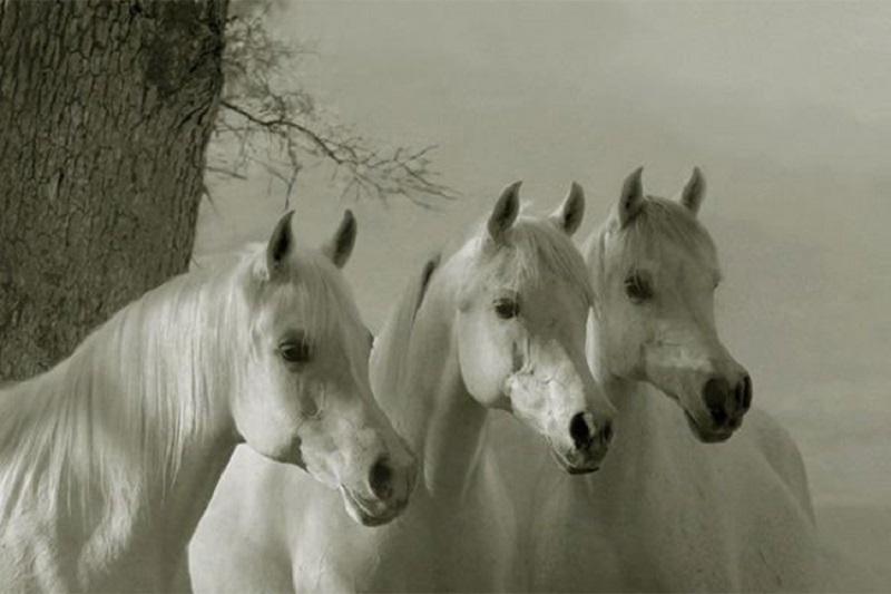 Tri bijela konja zbunila banjalučke vozače