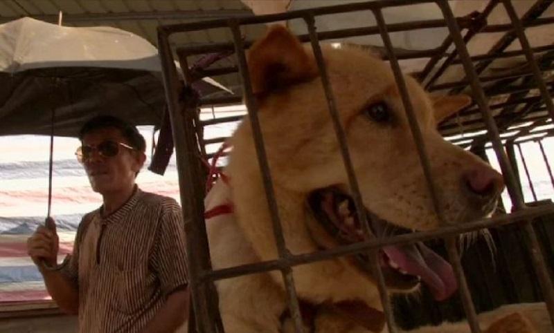 Tajvan zabranio ubijanje pasa i mačaka radi ishrane