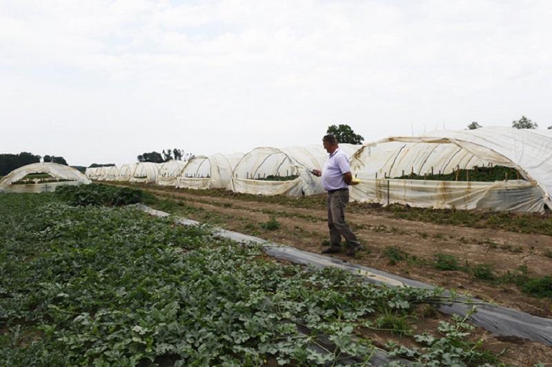 Lijevčanski poljoprivrednici u problemu: Nema radnika ni za 1.000 KM