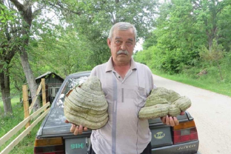 Pčelar iz Rogatice ubrao gljivu tešku devet kilograma