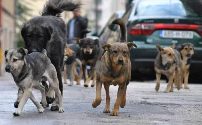 Smanjuju broj pasa lutalica na banjalučkim ulicama