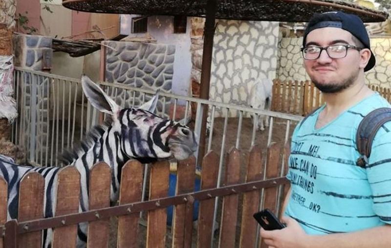 Podvalili posjetiocima zoo vrta: Ofarbali magarce da izgledaju kao zebre (VIDEO)