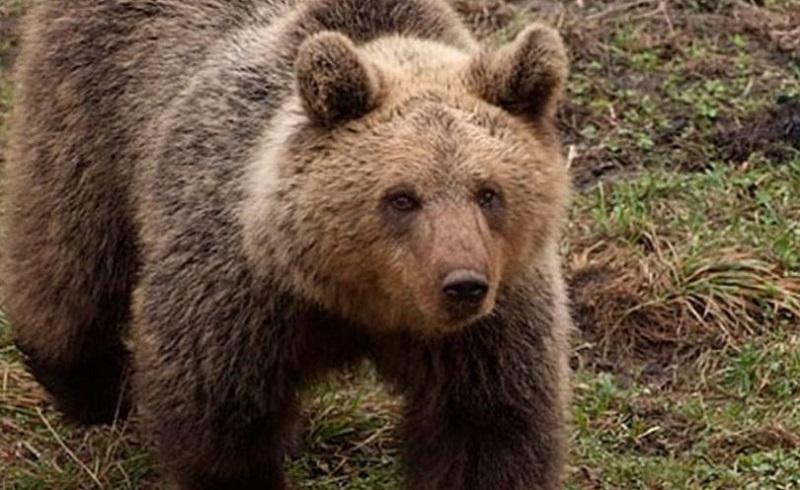 Fočak snimio bliski susret sa medvjedom u Perućici (VIDEO)