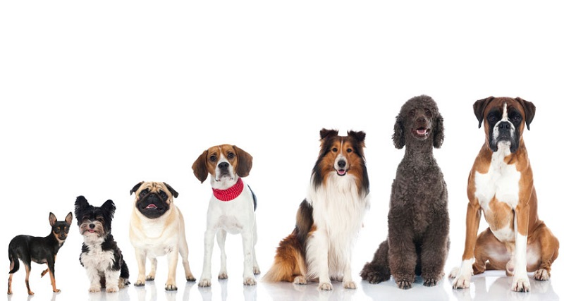 Najčešći mitovi o psima u koje mnogi vjeruju