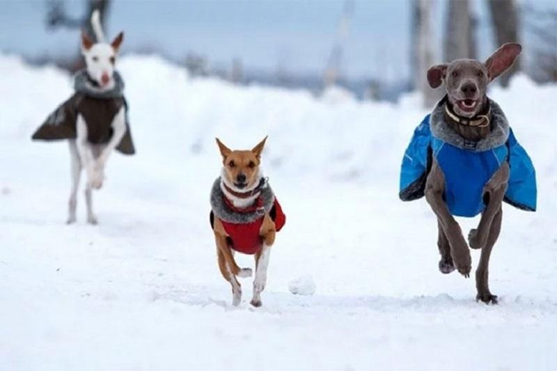 Da li psu treba odijelo i da li smije da jede snijeg?