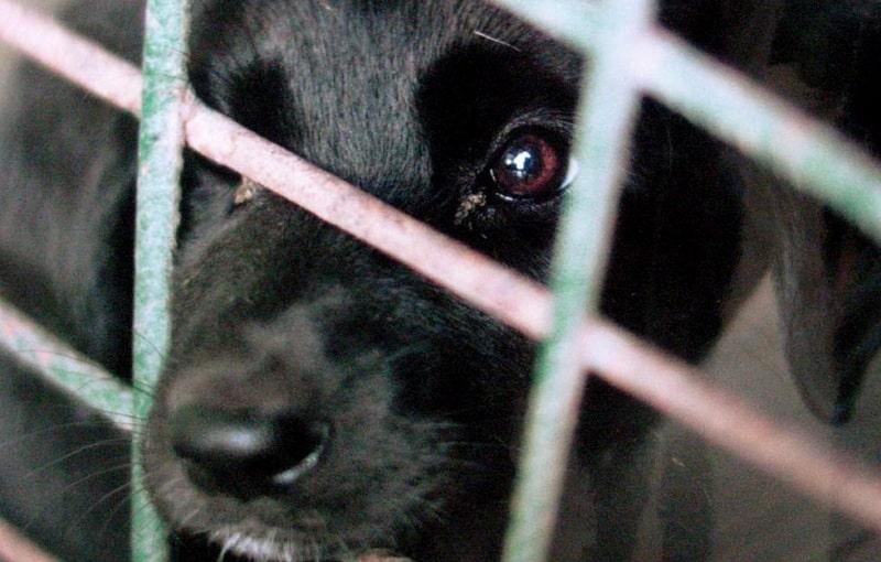 Banjaluka uskoro dobija novi azil za pse