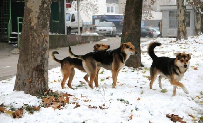 Azil za napuštene pse uskoro seli na Manjaču