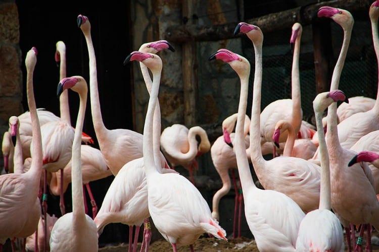 Flamingosi se druže kao ljudi, važan im fizički izgled