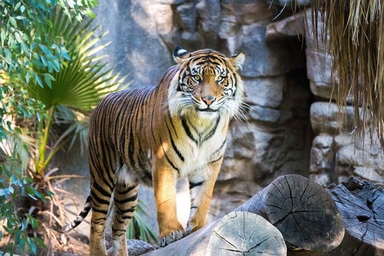Osam divljih životinja zaraženo virusom korona u Zoološkom vrtu
