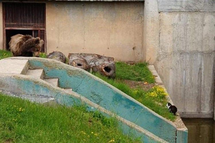 Neobično prijateljstvo mace i medvjeda u sarajevskom ZOO vrtu