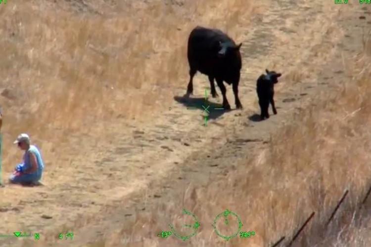 Muškarca i ženu napala krava, spasavali ih helikopterom