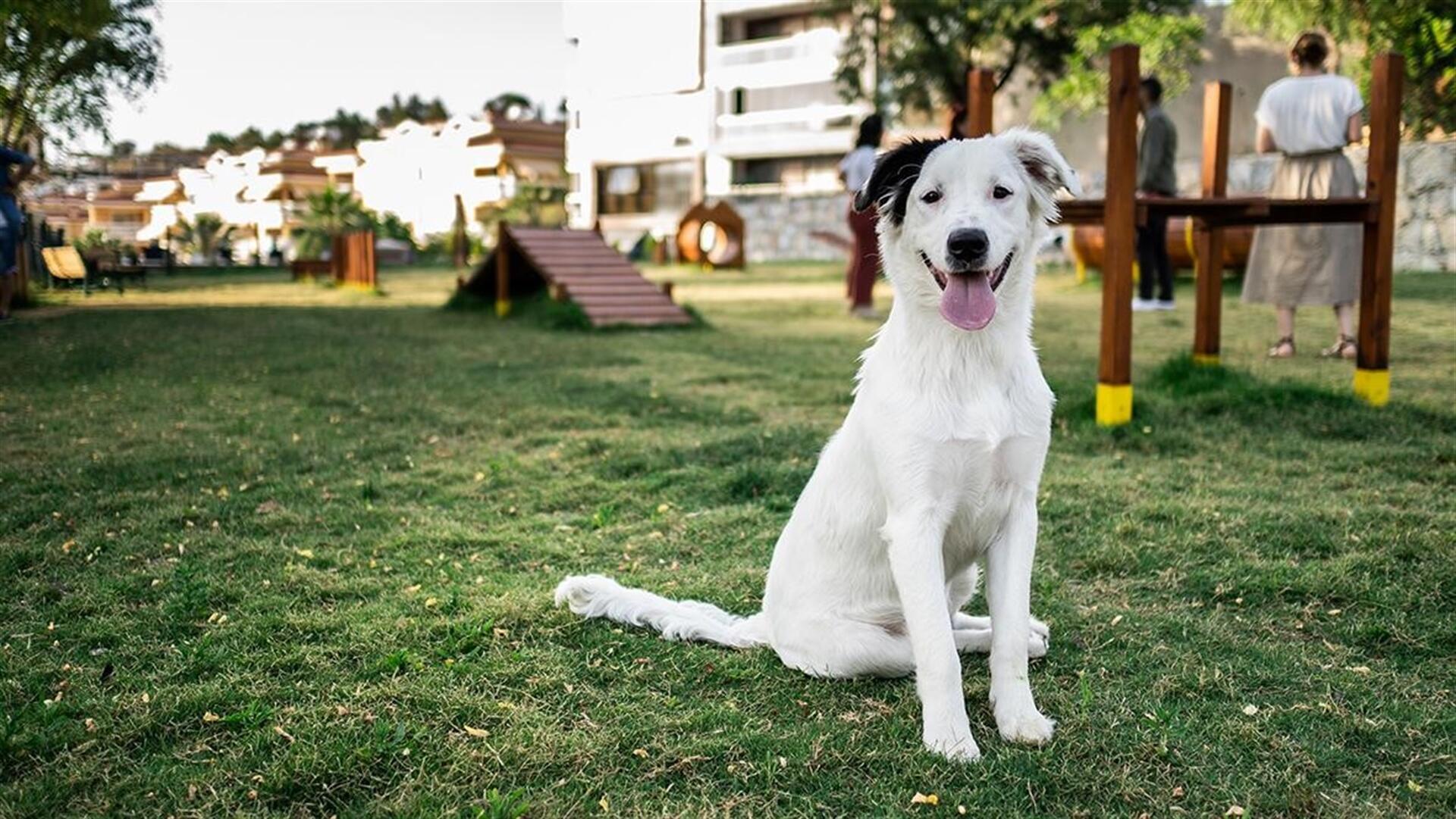 Banjaluka dobija prvu samouslužnu praonicu za pse