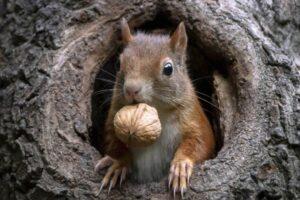 Vjeverice – najslađi foto modeli i čuvari prirode