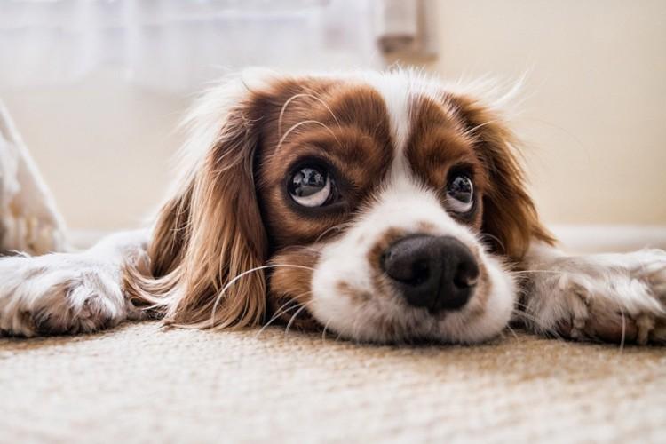 Devet znakova kojima psi pokazuju da su tužni i depresivni